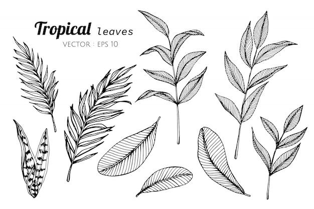 熱帯のコレクションセットは、イラストを描く葉します。 Premiumベクター