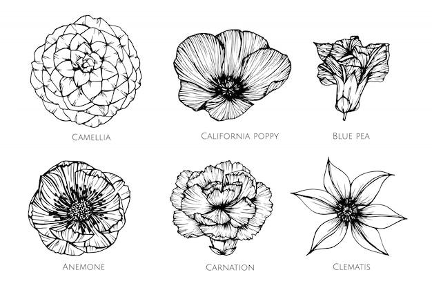 イラストを描く花のコレクションセット。 Premiumベクター