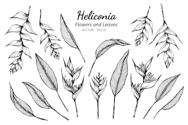 ヘリコニアの花と葉のイラストを描くのセットです。 Premiumベクター