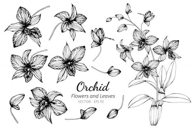 蘭の花と葉のイラストのコレクションセット。 Premiumベクター