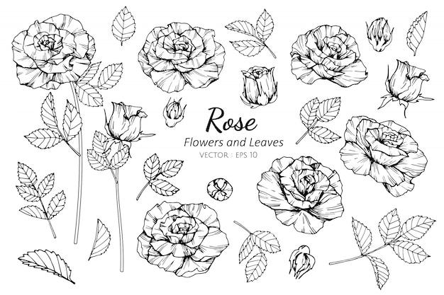 バラの花と葉のイラストのコレクションセット。 Premiumベクター