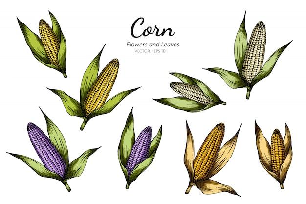トウモロコシの描画図のコレクションセット。 Premiumベクター