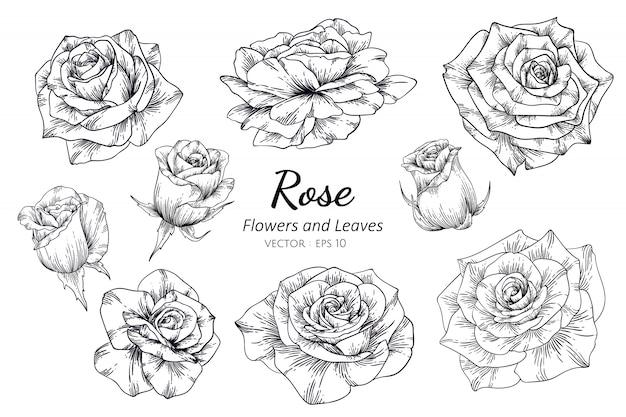 ラインアートとイラストを描くバラの花のセット Premiumベクター