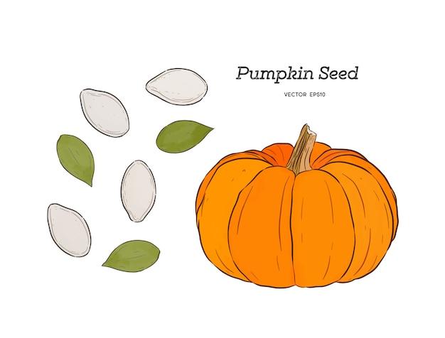 かぼちゃの種 Premiumベクター
