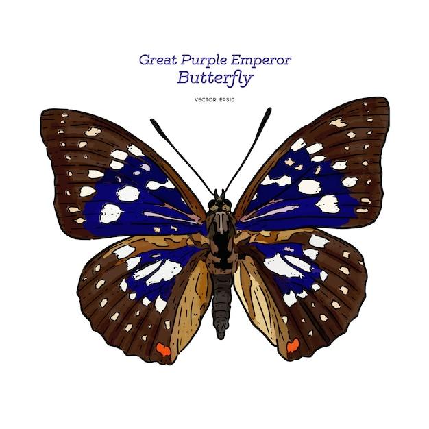 偉大な紫皇帝、手描きのスケッチのベクトル。 Premiumベクター