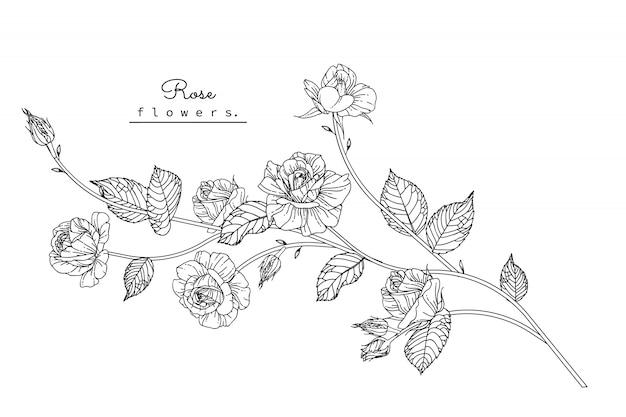 バラの葉と花の絵 Premiumベクター