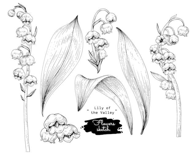 Эскиз цветочная коллекция ботаники, цветочные рисунки ландыша. Premium векторы