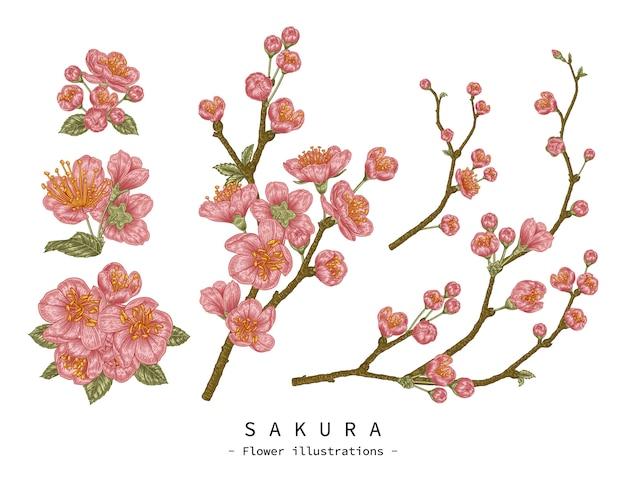 Эскиз цветочный декоративный набор. черри блоссом цветочные рисунки. старинные линии искусства, изолированные на белом фоне. рисованной ботанические иллюстрации. элементы Premium векторы