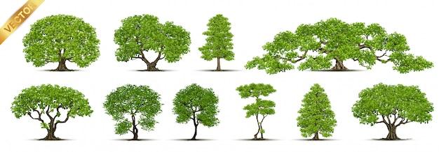 木のコレクション Premiumベクター
