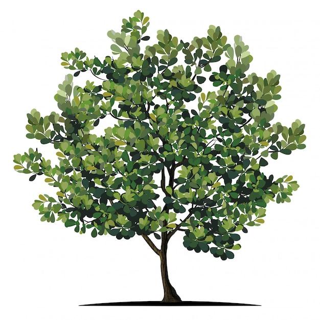 白で隔離される木 Premiumベクター