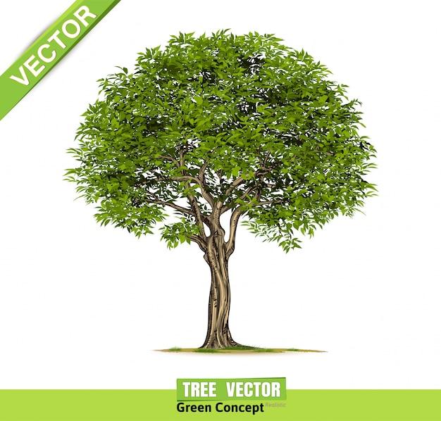 分離された現実的な木 Premiumベクター