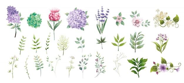 コレクションの緑の葉と花の水彩風を設定します。 Premiumベクター