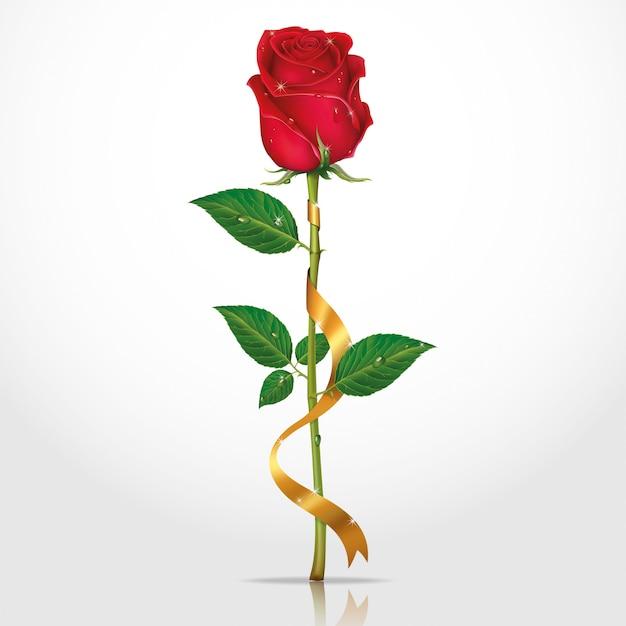 Роза с ленточкой картинки