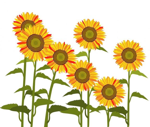 太陽の花のベクトル。 Premiumベクター