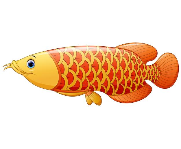 アロワナ魚 Premiumベクター