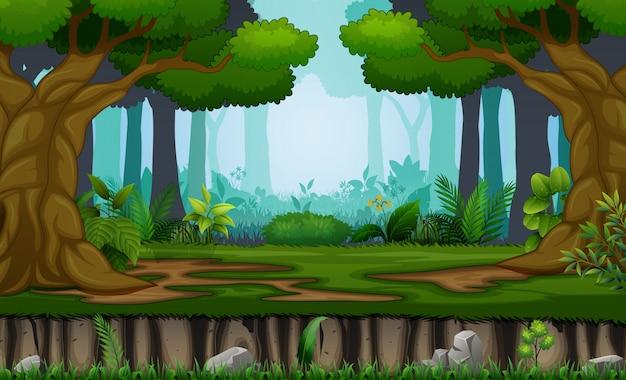 森の背景に多くの木 Premiumベクター