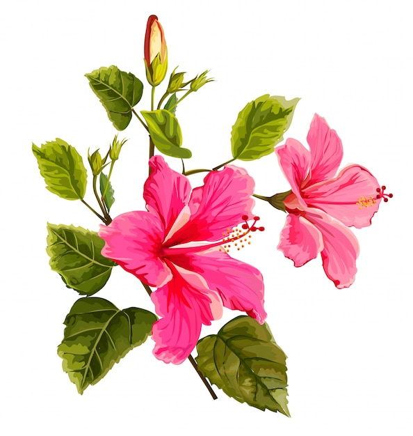 ハイビスカスの花のベクトル図 Premiumベクター