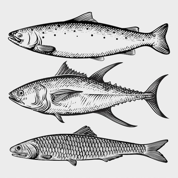 Рыбная коллекция тунец, лосось, сардина с гравировкой Premium векторы