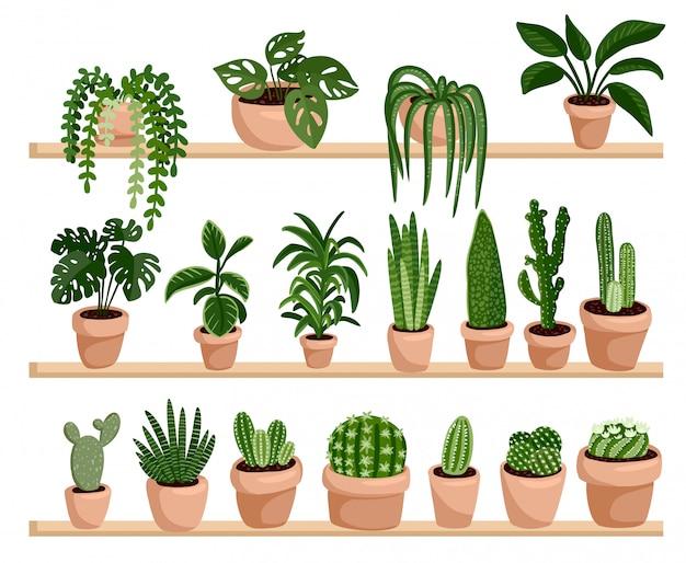 Горшечные сочные и кактусовые растения на полках в ряд открытку Premium векторы
