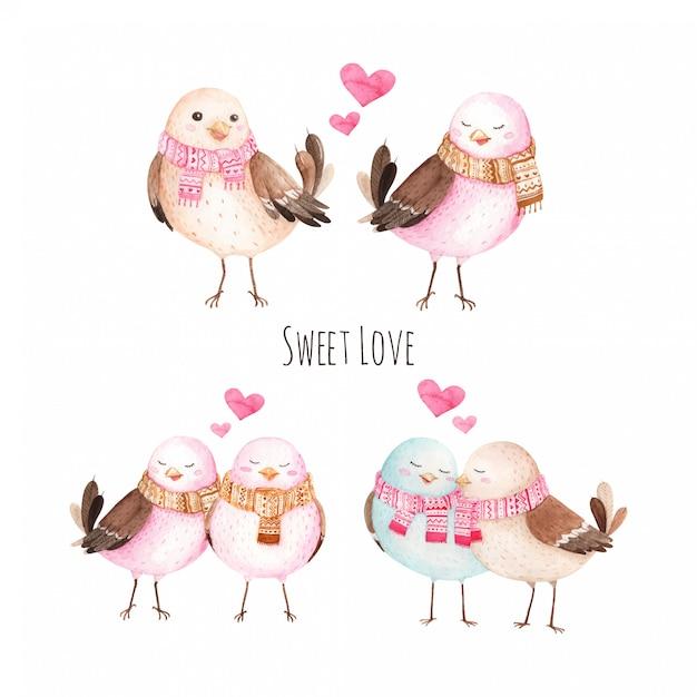 Сладкая любовь птица акварельные иллюстрации Premium векторы