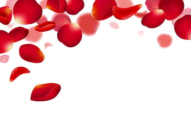 白地に赤いバラの花びら Premiumベクター