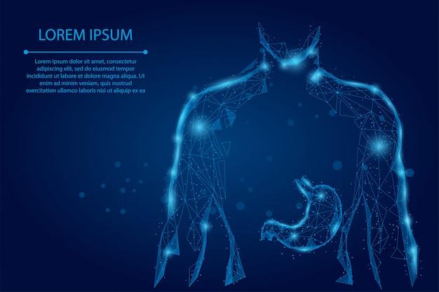 Абстрактная линия месива и точка человек силуэт здоровый живот связаны точки низкополигональная каркас Premium векторы