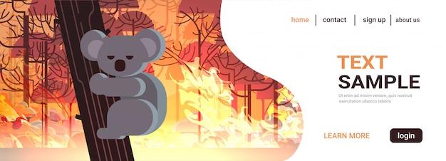Угрожающий медведь коала на деревьях животные, умирающие в австралии лесной пожар развитие куста сухие леса горящие деревья концепция стихийного бедствия интенсивное оранжевое пламя горизонтально Premium векторы