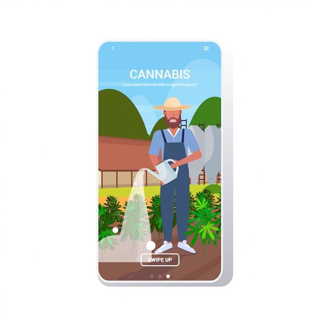 Фермер поливает коноплю промышленные плантации конопли растет марихуана баннер Premium векторы