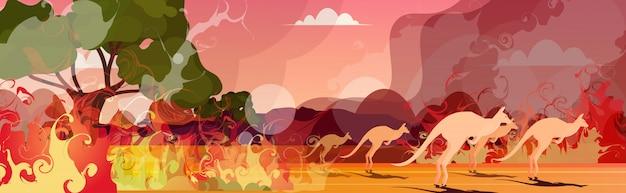 オーストラリアの森林火災から実行しているカンガルー山火事で死んでいる動物山火事燃える木自然災害の概念強烈なオレンジ色の炎水平 Premiumベクター