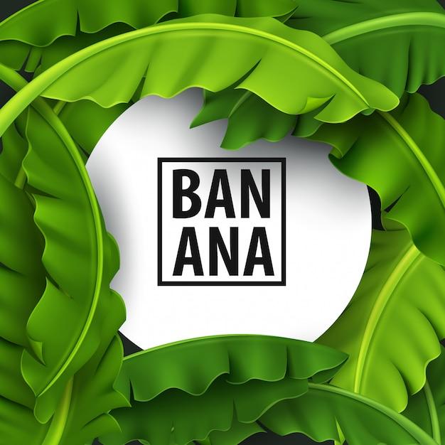 バナナの葉 Premiumベクター