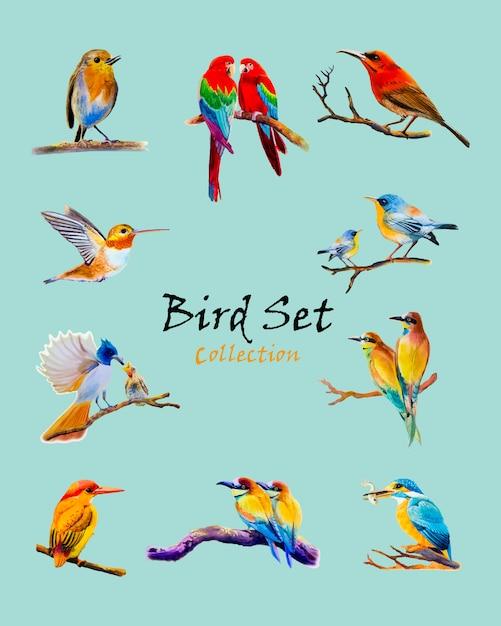 鳥のカラフルな鳥オリジナル水彩画 Premiumベクター
