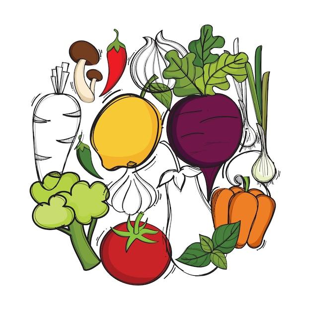 ベクトル有機野菜と手描きのイラスト Premiumベクター