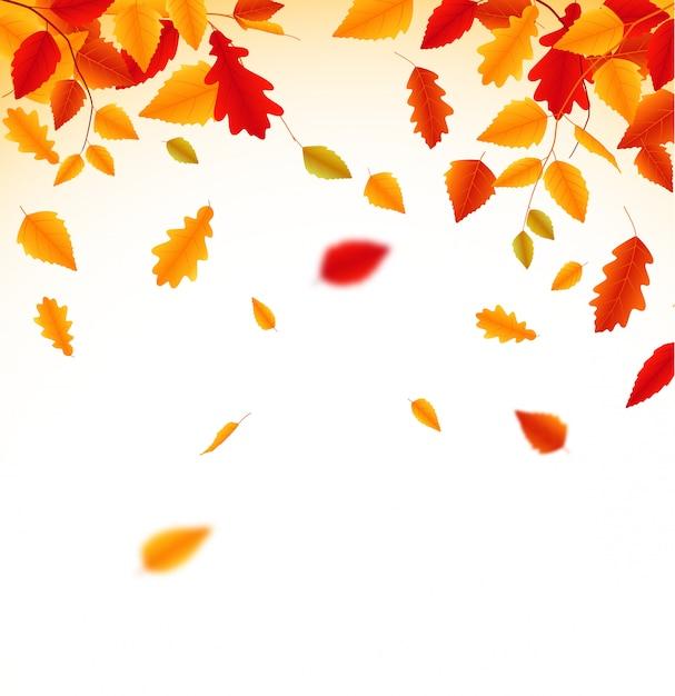 秋の落ち葉の背景 Premiumベクター