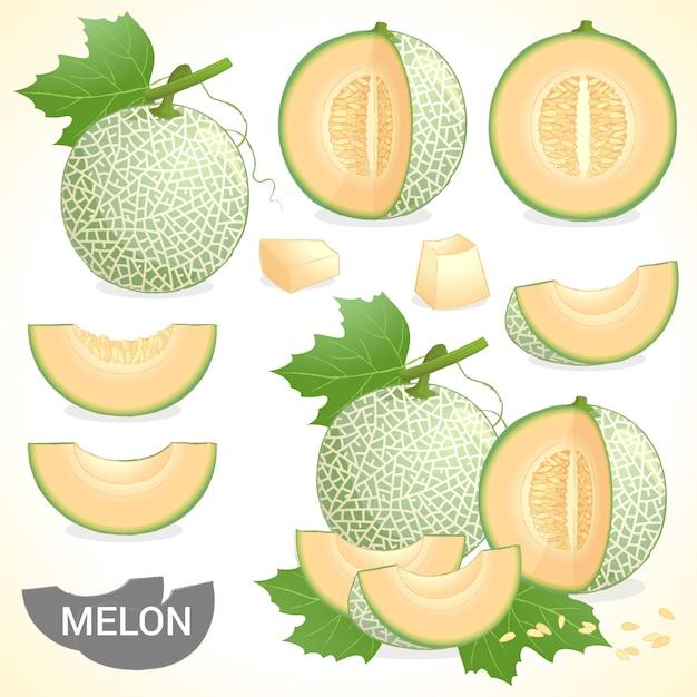メロン果実の様々なスタイルのベクトル形式のセット Premiumベクター