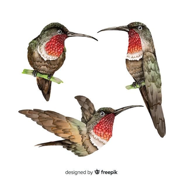 水彩のリアルな鳥のコレクション 無料ベクター