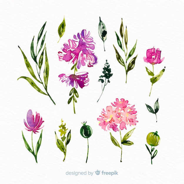 美しい水彩花支店コレクション 無料ベクター