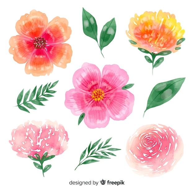 Красочные цветущие цветы с фоном листьев Бесплатные векторы