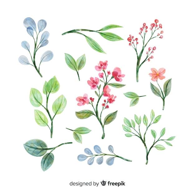 水彩の芸術的な花の枝コレクション 無料ベクター