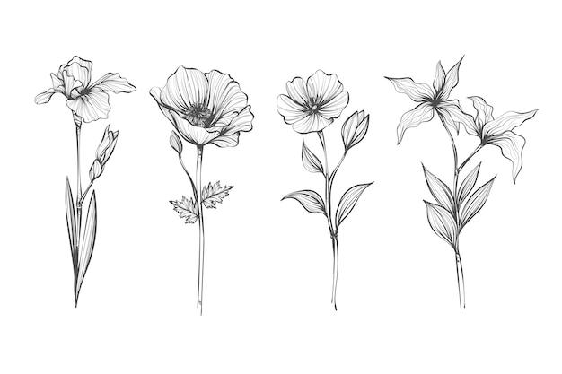 Реалистичная рисованной коллекция старинных ботаники цветов Бесплатные векторы