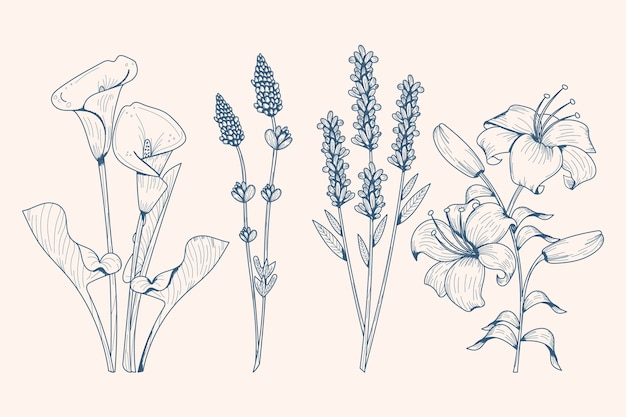 Реалистичные рисованной травы и дикие цветы Бесплатные векторы