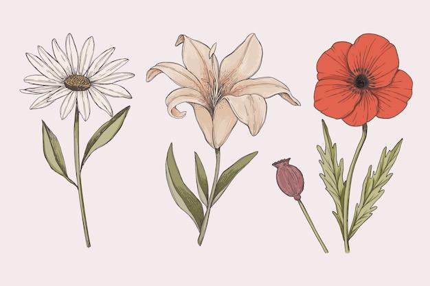 カラフルなヴィンテージ植物の花コレクションを描く 無料ベクター