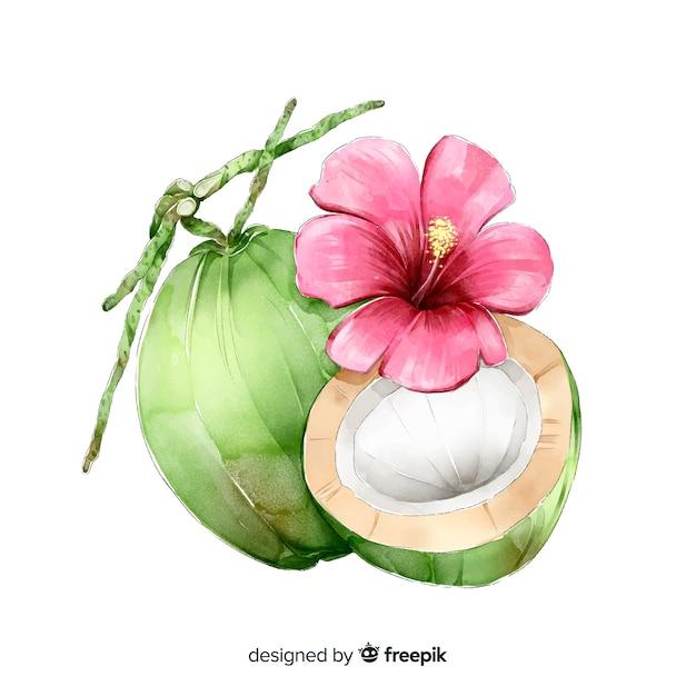 水彩ココナッツ 無料ベクター