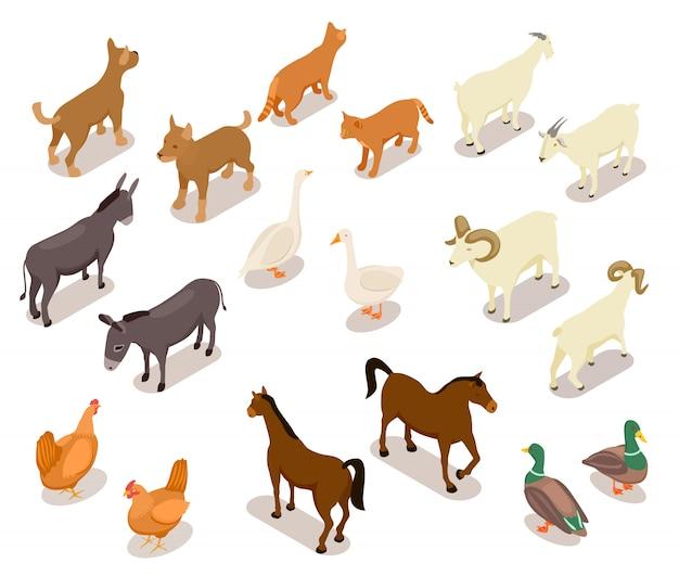 Домашний скот . лошадь и собака, кошка и гусь, курица и коза, баран и утка, осел. набор домашних животных Premium векторы