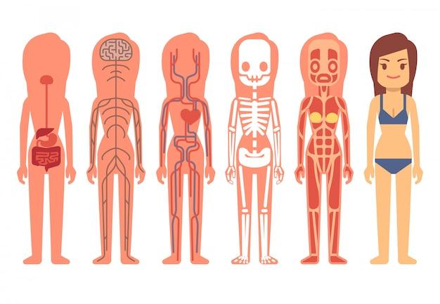 医者女性体解剖学ベクトルイラスト ベクター画像 プレミアム