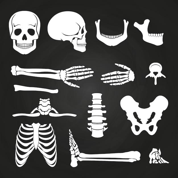 Коллекция человеческих костей на доске Premium векторы