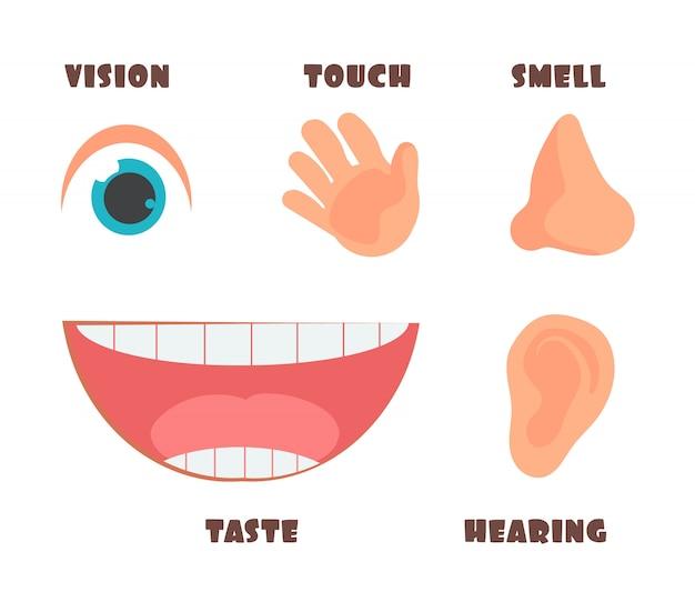 Человеческие чувства мультфильм иконки с символами глаз, носа, уха, руки и рта Premium векторы