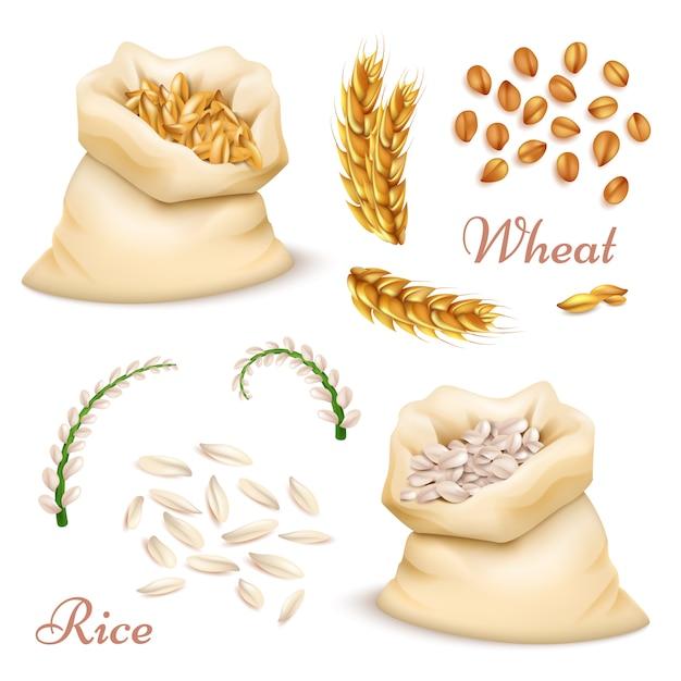 農業用シリアル-小麦と米が分離されました。ベクトル現実的な穀物、耳クリップアートコレクション Premiumベクター