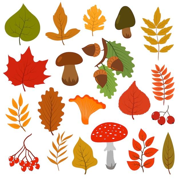 Желтые осенние листья, грибы и ягоды. Premium векторы