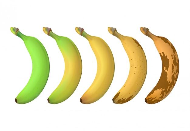 Уровень созревания плодов банана варьируется от зеленого недозрелого до коричневого гнилого. векторный набор изолированных Premium векторы