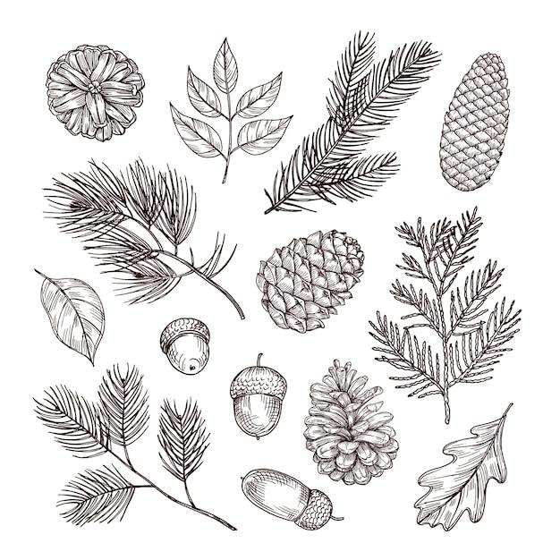 モミの枝をスケッチします。ドングリとマツ円錐形。クリスマスの冬と秋の森の要素。手描きヴィンテージ分離セット Premiumベクター